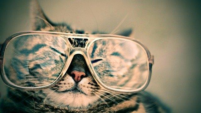 očala-mačka